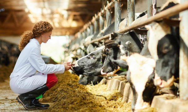 portrait-women-cows